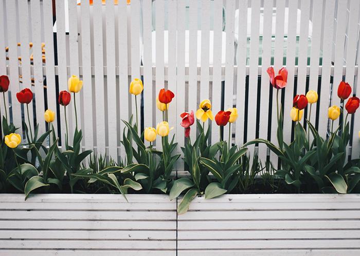 Sichtschutz und Zaunsysteme für den Garten